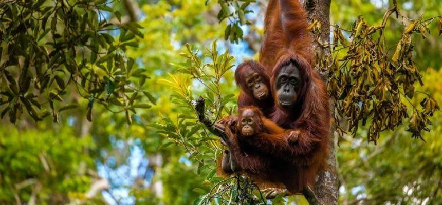Osservando gli animali ci riscopriamo un po' meno umani