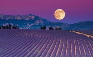 Luna-con-paesaggio-e-fiori-di-Bach