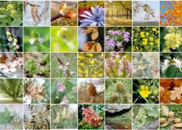Dodici fiori di Bach, dodici bambini-tipo