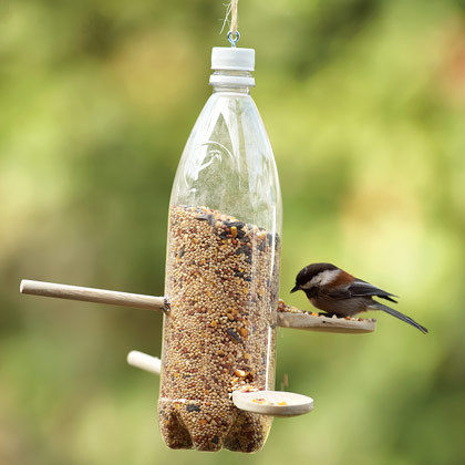 Bird feeding, ossia nutrire gli uccelli
