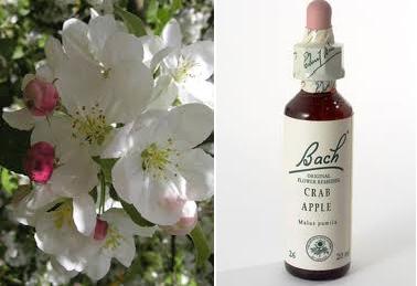Purificarsi con i fiori di Bach