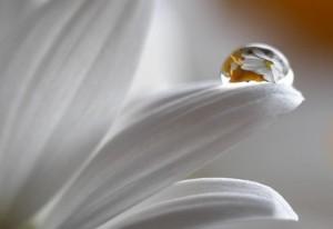 fiore delicato come esseri di luce