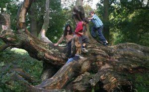 arrampicarsi - alberi - bambini
