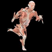 esempio mostra corpo umano torino bambino naturale