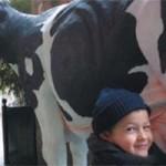 latte di mucca materno