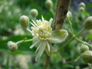 fiori di bach per il bambino