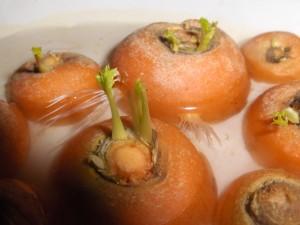 carote coltivate con orto in casa