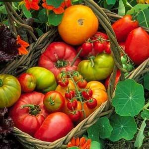 L'orto a scuola: seminiamo buon cibo