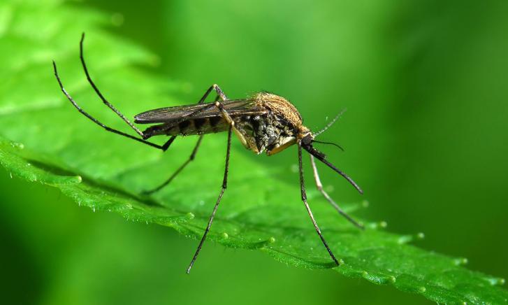 In estate allontanare le zanzare in modo naturale